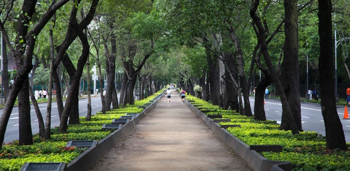 path, jogger, trees, park, avenue